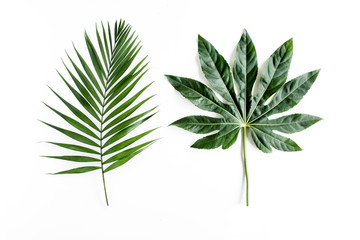 Tropical palm leaves Aralia isolated on white background. Tropical nature concept. Wall mural