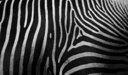 Canvas Prints Zebra Close up detail of the stripes of a Zebra in black and white