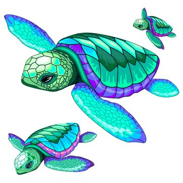 Sea Turtles Dance Oceanlife Vector Illustration