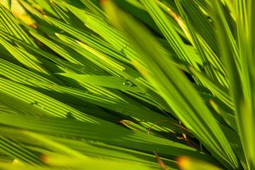 Poster Palm tree textura de vegetação do campo