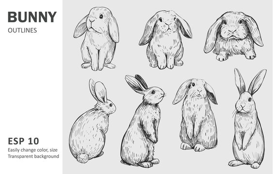 130,433 BEST Rabbit Drawing IMAGES, STOCK PHOTOS & VECTORS Adobe Stock