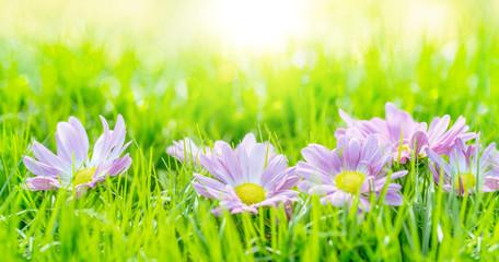 Foto op Aluminium Pistache flowers in the grass