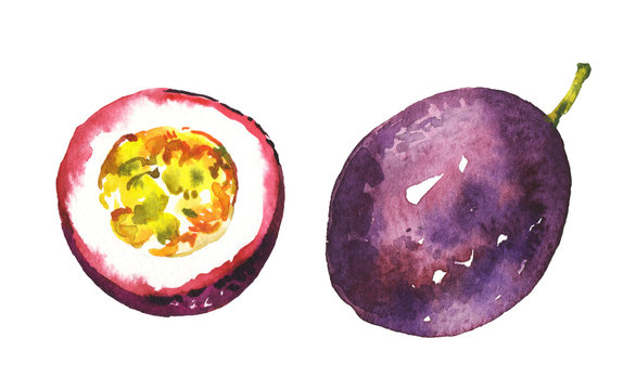 Watercolor exotic tropical passion fruit illustration isolated on white background