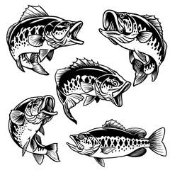 set of black and white of largemouth bass fish