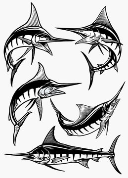 set of marlin fish in black and white