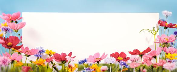 Spoed Fotobehang Bloemen Cosmos flower with blank card