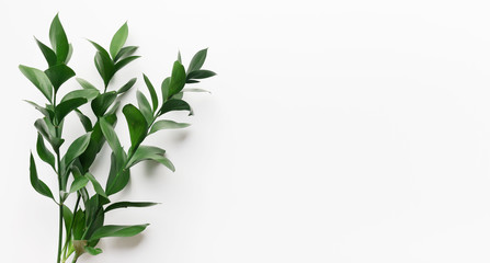 Green living plant branch on white background