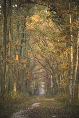 Wall Murals Road in forest Piękne kolorowe drzewa jesienią w lesie