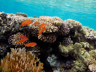 Fototapete - Colorful reef underwater landscape with fishes and corals