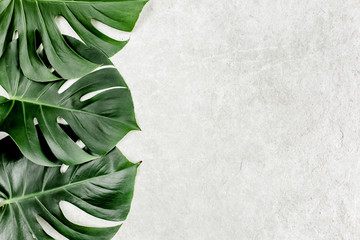 Wall Mural - Close-up of the Monstera leaf. Tropical palm leaves Monstera isolated on gray marble background. Tropical nature concept.