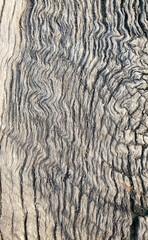Photo sur Toile Les Textures old wood seams good
