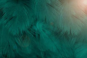 Wall Mural - Beautiful dark green colors tone  feather with orange light texture pattern background,trends color