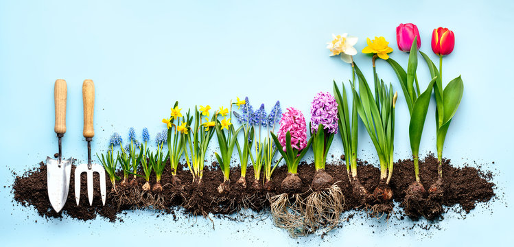 Plants and gardening tools on blue background.