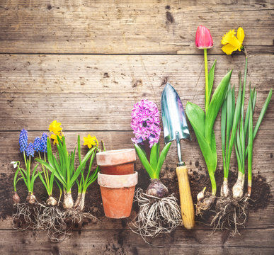 Plants and gardening tools on wooden background.