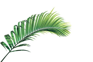 Wall Mural - Tropical palm leaves foliage plant, green palm frond isolated on white background with clipping path.