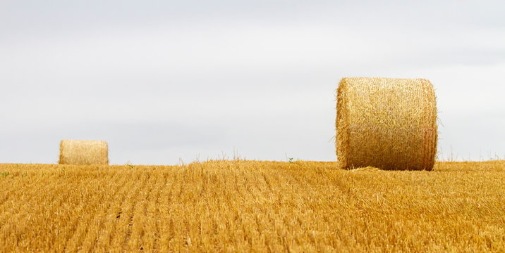 Big round bales of straw in a field after harvest by cloudy day