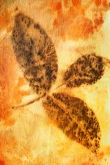 A dark leaf pattern on eco-printed silk