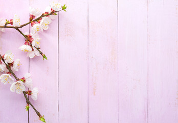 Branches of Apricot with white flowers on a light pink shabby wooden board. Top view.