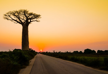 Poster Baobab Stunning sunset with silhouette of majestic baobab tree in foreground, Morondava, Madagascar