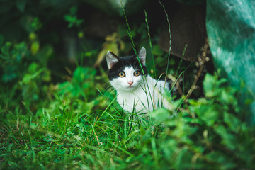Chaton dans l'herbe