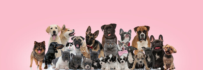 Large group of domestic animals posing wearing bowties