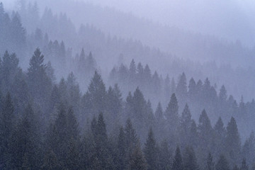 Poster Morning with fog Forest in Fog and Snow