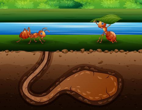 Ants cartoon crawling back to the hole