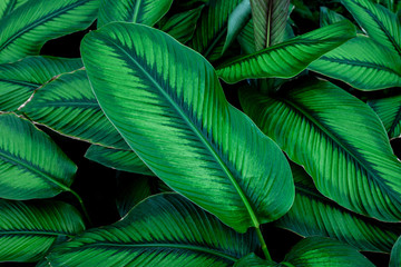 green leaves nature  background, closeup leaves texture, tropical leaves Wall mural