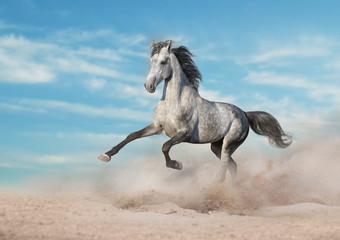 Wall Mural - Grey horse run gallop in desert sand against blue sky