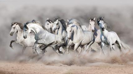 Wall Mural - White horses free run in desert