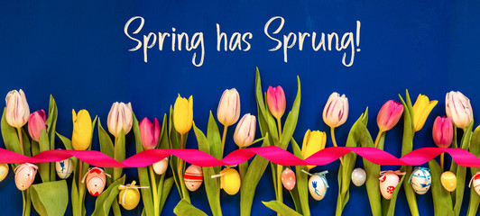 English Text Spring Has Sprung. Banner Of White And Pink Tulip Spring Flowers With Ribbon And Easter Egg Decoration. Blue Wooden Background