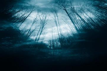 night in dark mysterious forest, dark halloween background