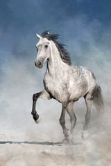 Wall Mural - Horse free run