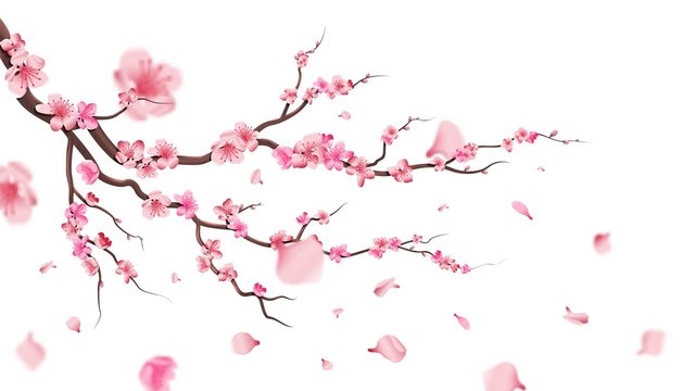 Sakura blossom branch. Falling petals, flowers. Isolated flying realistic japanese pink cherry or apricot floral elements fall down vector background. Cherry blossom branch, flower petal illustration