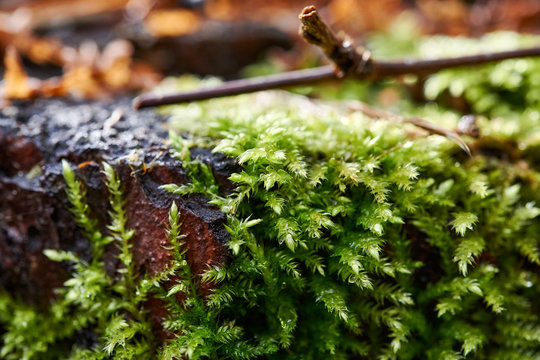 Beautiful moss background in the forest
