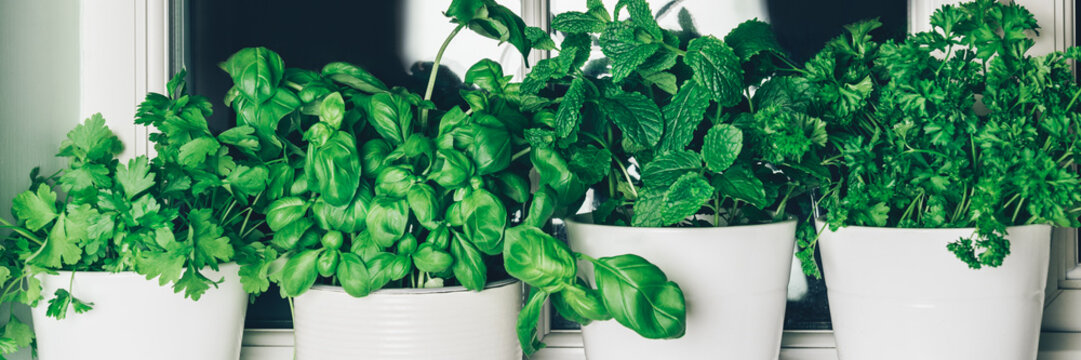 Basil. mint, parsley, coriander
