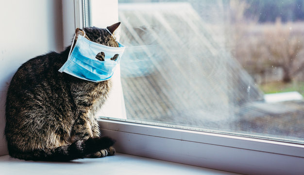Virus. Cat in a protective gauze bandage from viral diseases.