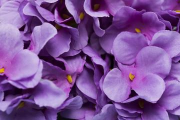 Fond de hotte en verre imprimé Hortensia Close up purple blooming flowers