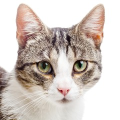 Spoed Fotobehang Kat Close up portrait of young domestic cat kitten isolated on white