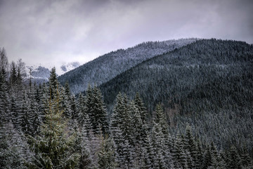Papiers peints Europe de l Est Winter cloudy landscape of the Carpathian Mountains in Eastern Europe
