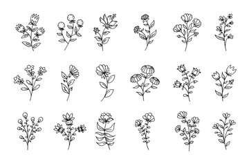 Set of flowers, black line art flowers, outline floral illustrations, flowers drawings