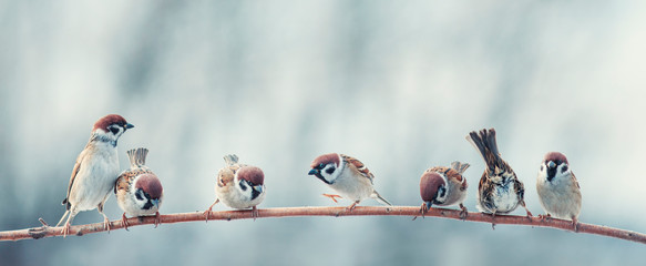 Wall Mural - many funny little birds sparrows are sitting nearby on a tree branch in the garden and cheerfully tweeting
