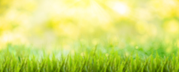 background with grass and sun