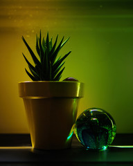 Potted cactus next to crystal ball under the light trail