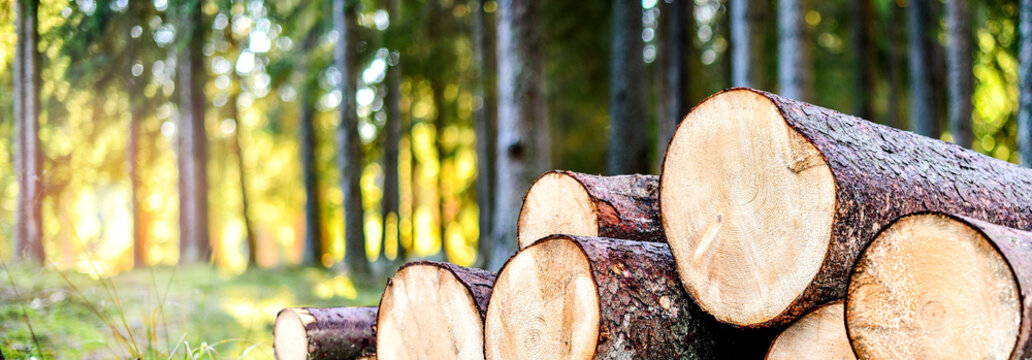 Log trunks pile, the logging timber forest wood industry. Wide banner or panorama wooden trunks