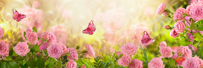 Fabulous blooming pink rose flower summer garden and flying fantasy peacock eye butterflies on blurred sunny shiny glowing background, mysterious fairy tale spring floral wide panoramic holiday banner Fotomurales