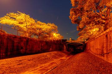 Foto auf Leinwand Rot kubanischen 照明で照らされた夜明けの桜