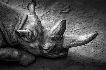 Foto op Aluminium Neushoorn rhinoceros exhausted