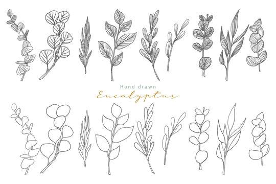 hand drawn eucalyptus leaves