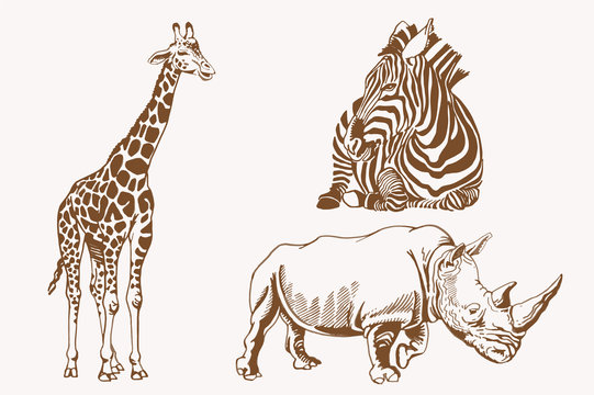 Graphical vintage set of savanna animals , sepia background,vector illustration